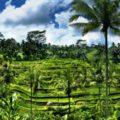 Wisata ala Pedesaaan di Terasering Sawah Tegalalang Ubud