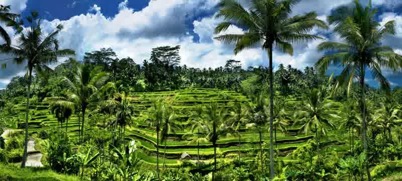 terasering sawah tegalalang 2 » Wisata ala Pedesaaan di Terasering Sawah Tegalalang Ubud