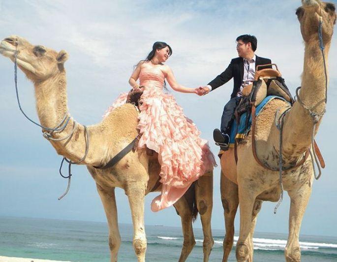 wisata bali camel safari 1 » Wisata Bali Camel Safari, Berikan Pengalaman Liburan Unik Naik Unta di Tepi Pantai