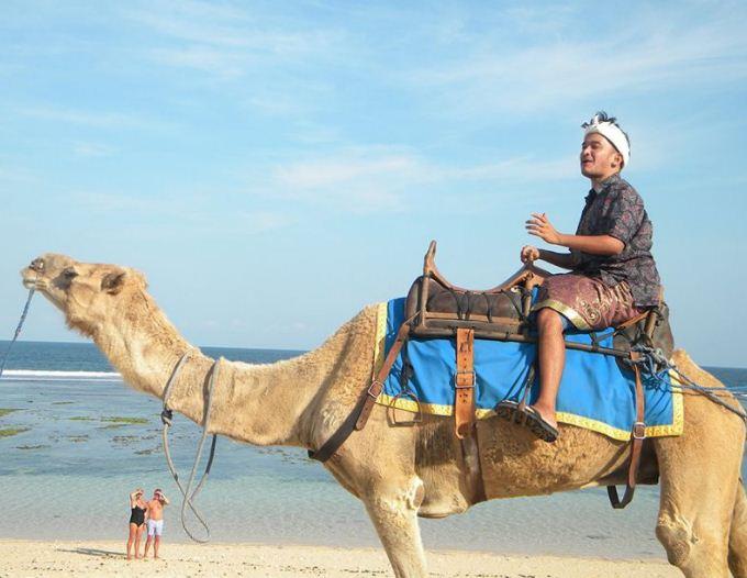 Wisata Bali Camel Safari, Berikan Pengalaman Liburan Unik Naik Unta di Tepi Pantai